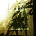 Small photo of Rain, Plant, Shadows and a Net Curtain.