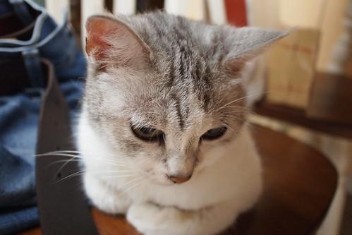 包子猫 - flickr 上的相片集