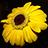 the EL ENCANTO DE LAS FLORES  -THE CHARM OF FLOWERS (Post 1-Award 2) group icon