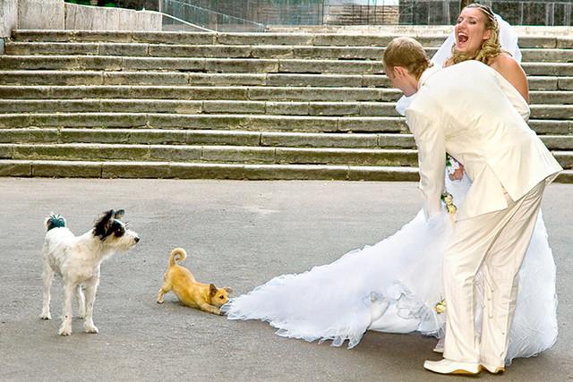Похищение невесты | Kidnapping of bride