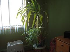 Polish Plant