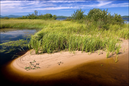 summer lake beach nature landscape sand natural sandy lakeshore fen naturalarea ossipeelake transitionzone pondshore carexutriculata bottleshapedsedge sandydeltaicdeposits