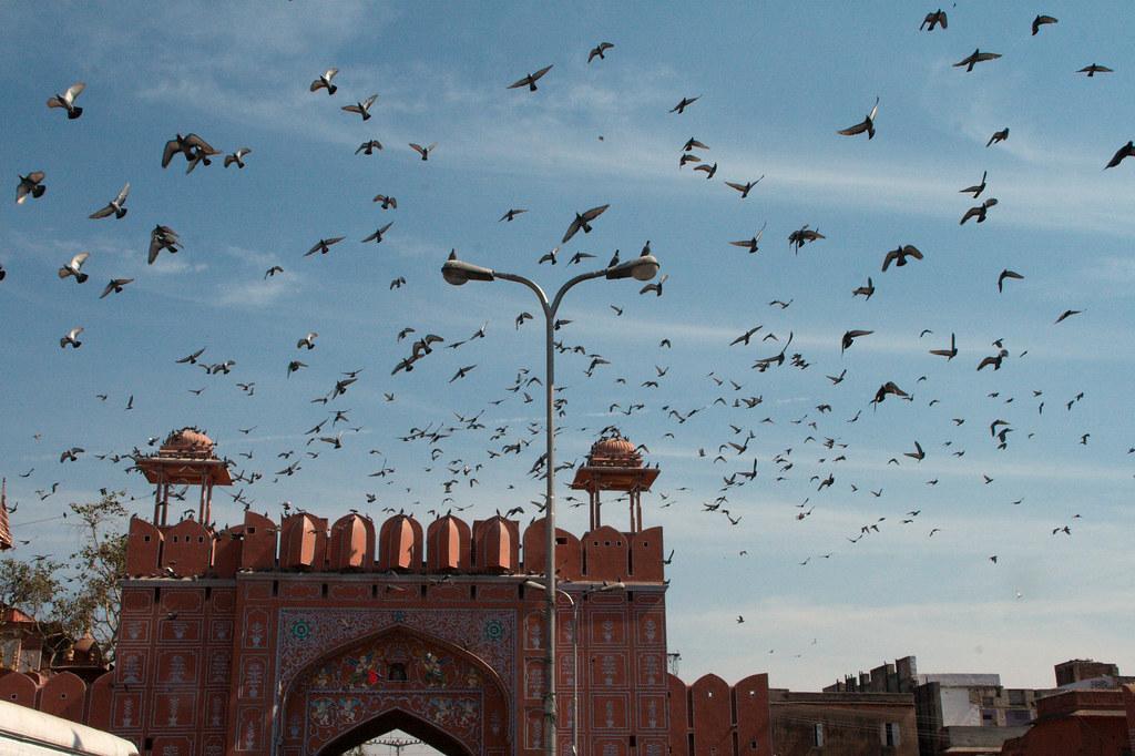 Jaipur-014