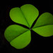 clover image, photo or clip art