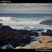Goose on the beach, Monterey
