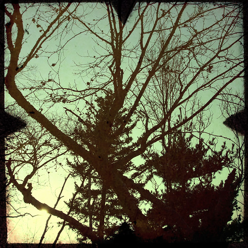 TreesTtv 1 by ghettojack
