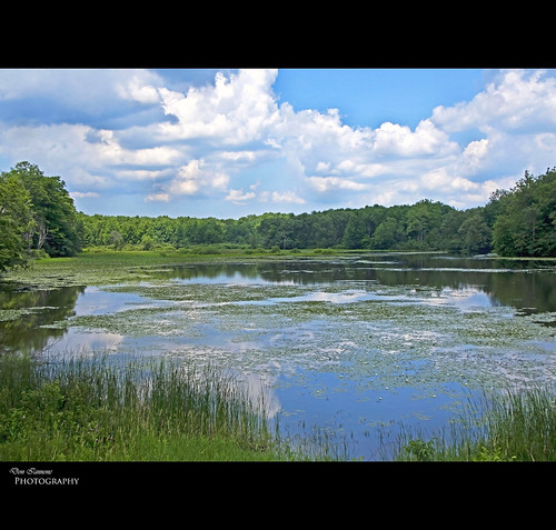 ohio summer lake clouds interestingness nikon flickr eagle bald bluesky explore summertime lilypads naturepreserve birdsanctuary baldeagles cuyahogariver naturesbeauty northeastohio wildplaces geaugacounty sceniclandscape landscapephoto headwaterspark doniannone summerbook july2009 doniannonephotography nikond2xcamera skyreflectionsinwater