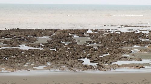 桃園外海的藻礁。(圖片來源:蔡嘉陽)
