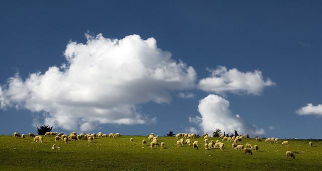 背景 壁纸 草原 风景 天空 桌面 500_266