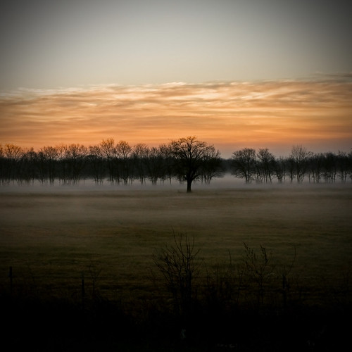 morning trees sky fog sunrise dawn texas olympus calm serene greenvilletexas e410 gtowneric