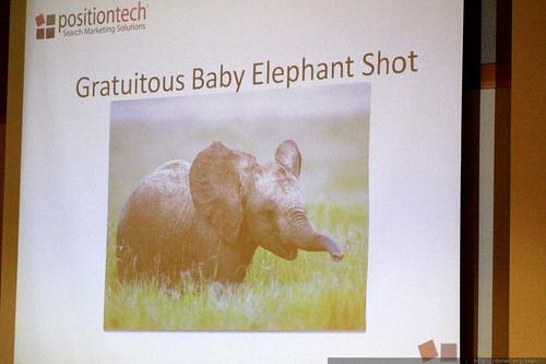 slide   gratuitous baby elephant   SEM PR panel   sempdx searchfest 2009    MG 9530