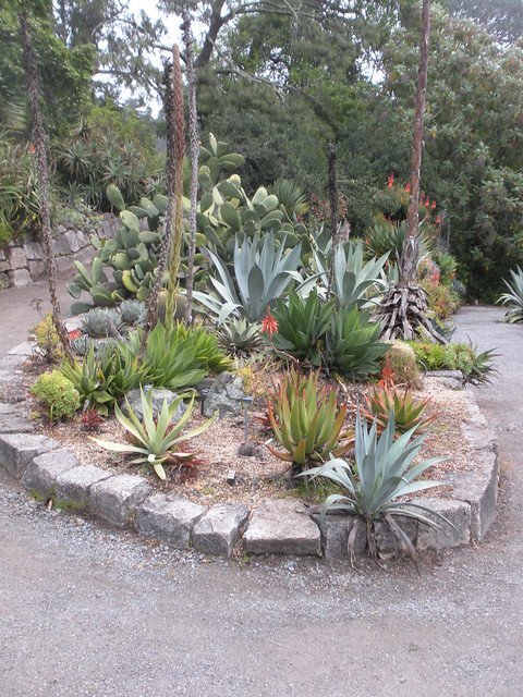 Cactus and succulent garden flickr photo sharing