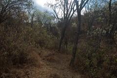 Sierra de la Laguna-1037
