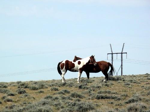 20090830 37 Horses near Arminto, WY
