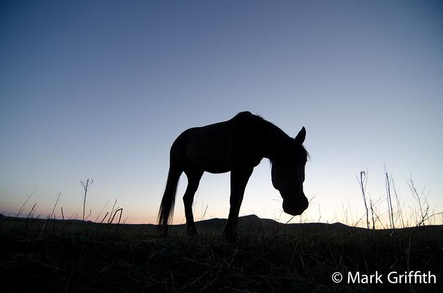 Good Morning Mongolia