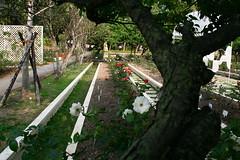 090306 Rose Gardens