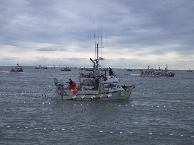 Salmon fishing boats in Bristol Bay