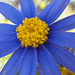 Wallpaper 1920x1280 blue aster