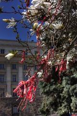 A Martenitsa Tree