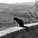 Gatto in Val d'Orcia / Cat in Val d'Orcia