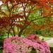 Japanese garden by Frans Schmit