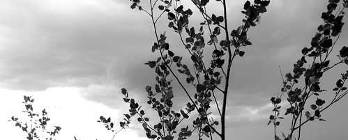 blackandwhite storm canon branches