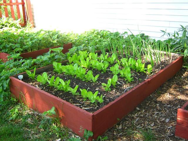 Alternativa verde huerta en oto o qu plantar y qu for Plantas para huerta organica