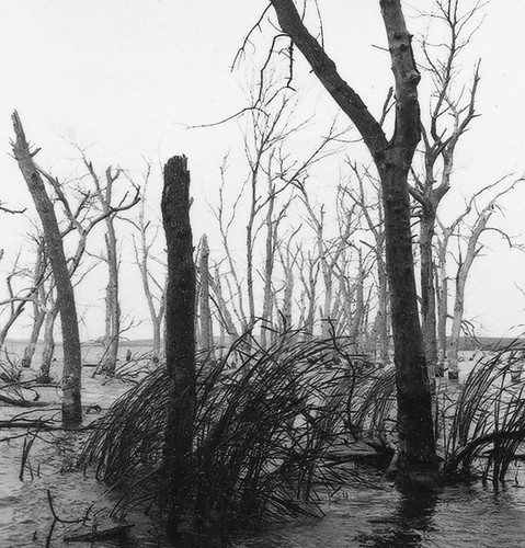 Tornado Trees, Lake Siani, SD