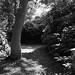 Bois des Moutiers. ©iJuliAn