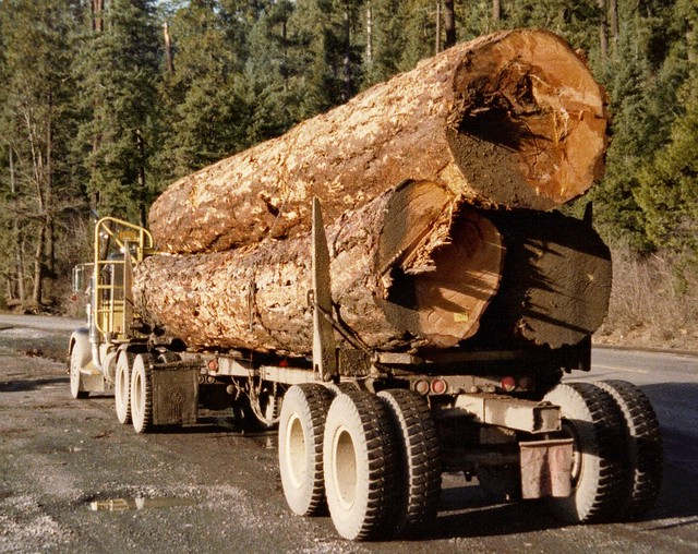 Forest Service Wants to Fast-Track Logging Without Environmental Review