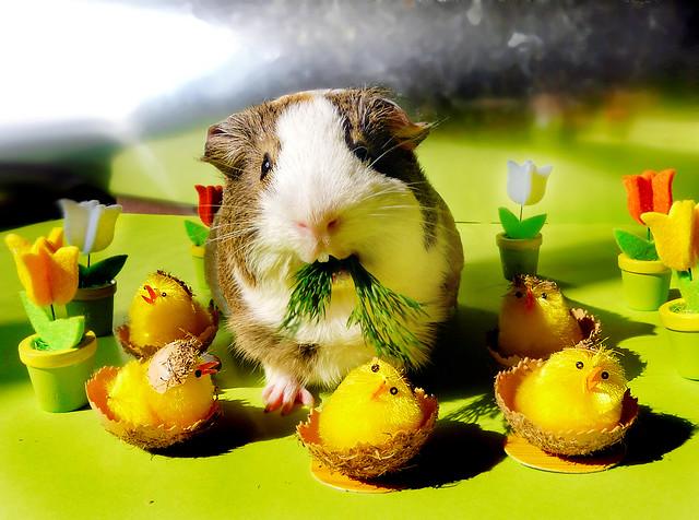 Easter Balbinka & dill