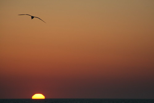 Another seagull/sunset picture