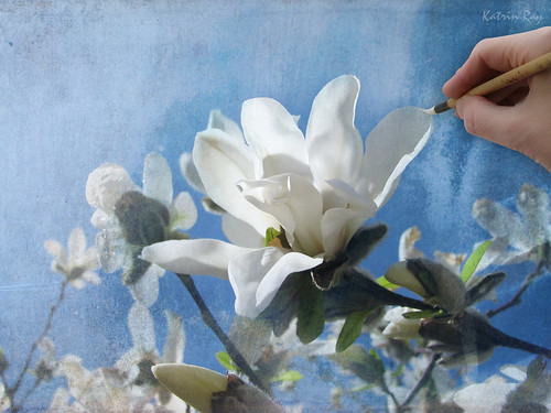 Magnolias in Bloom. Final Touch.