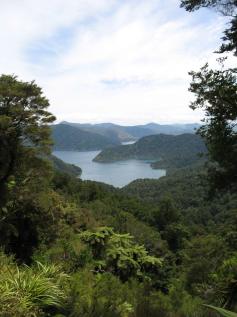 Nydia Track, Marlborough Sound, New Zealand