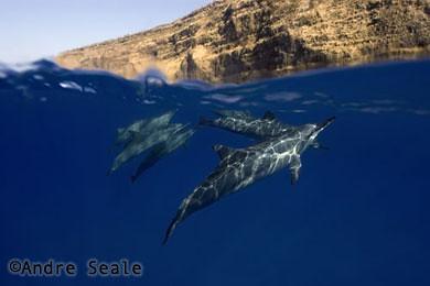 Golfinhos de Kealakekua