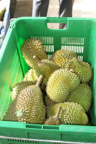 malaysia durian muar geotagging