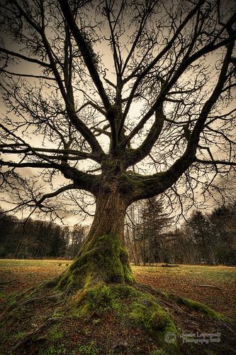 winter sky tree forest geotagged grey maple woods bc gray langley hdr sigma1224 redwoodpark janusz 5901 leszczynski bigleafmaple thesecretlifeoftrees picwithsoul 5d2 lonelyintheforest geo:lat=49034253 geo:lon=122728068