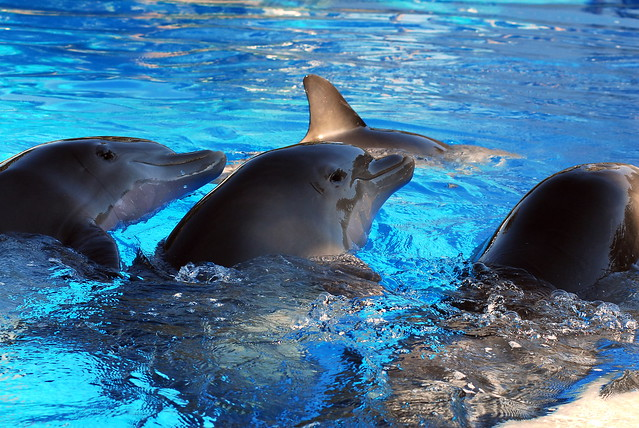 Dolphin Olympics | Fli...