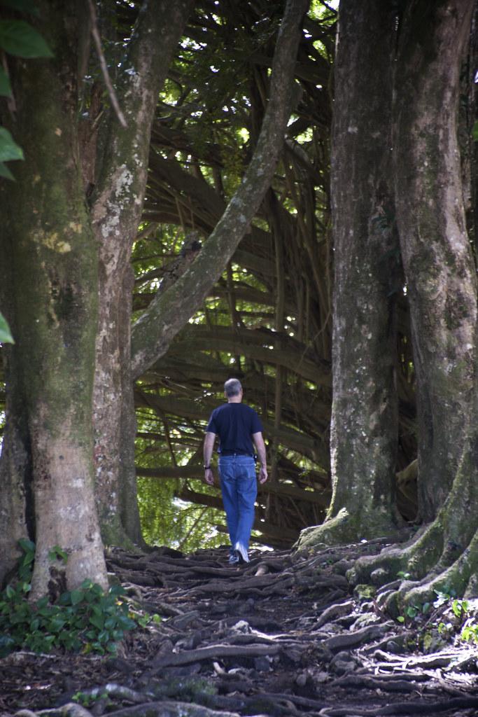 David Amongst Trees