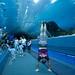 Georgia Aquarium Tunnel - Atlanta, Georgia
