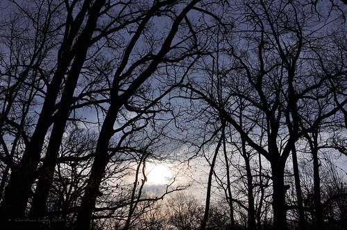 trees sky storm rain silhouette clouds dark mortonarboretum darkening eastwoods outgoesthesun