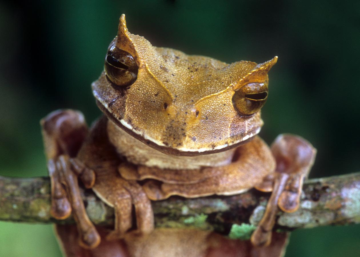 Верхний голая кожа помогает лягушке дышать рука, воровато