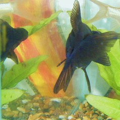 #45 Fish