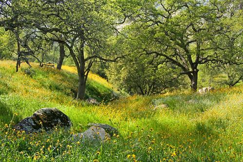 Homer Ranch