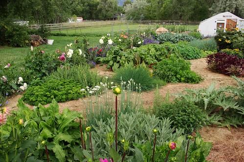 Ivory blush roses bj 39 s garden for Attractive vegetable garden fence