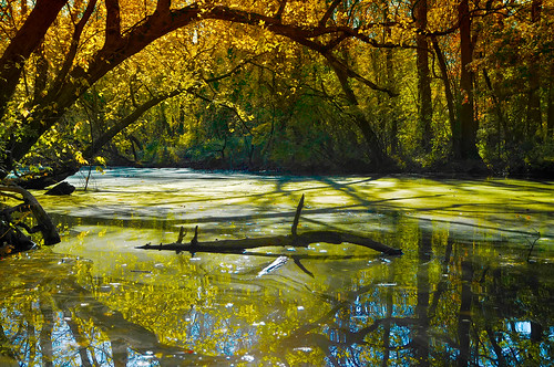 autumn reflection fall water beautiful leaves geotagged canal newjersey fantastic nj dramatic swamp princeton captivating mudpig stevekelley