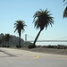 Avenue of the Palms - Treasure Island