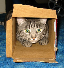 Cat in the Box | by admiller