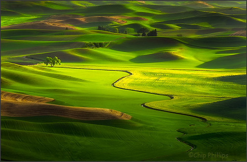 Lone Tree, Palouse Hills