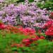 azalea garden by Wils 888